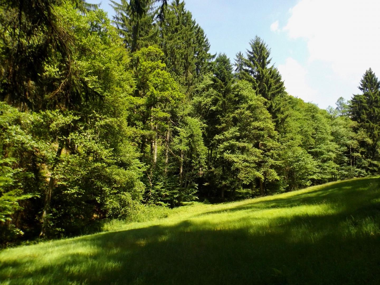 In Taubenwiesbachtal