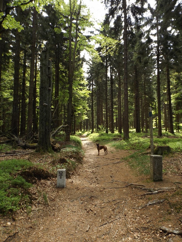 Soll ich jetzt in Bayern oder Böhmen weiterlaufen?