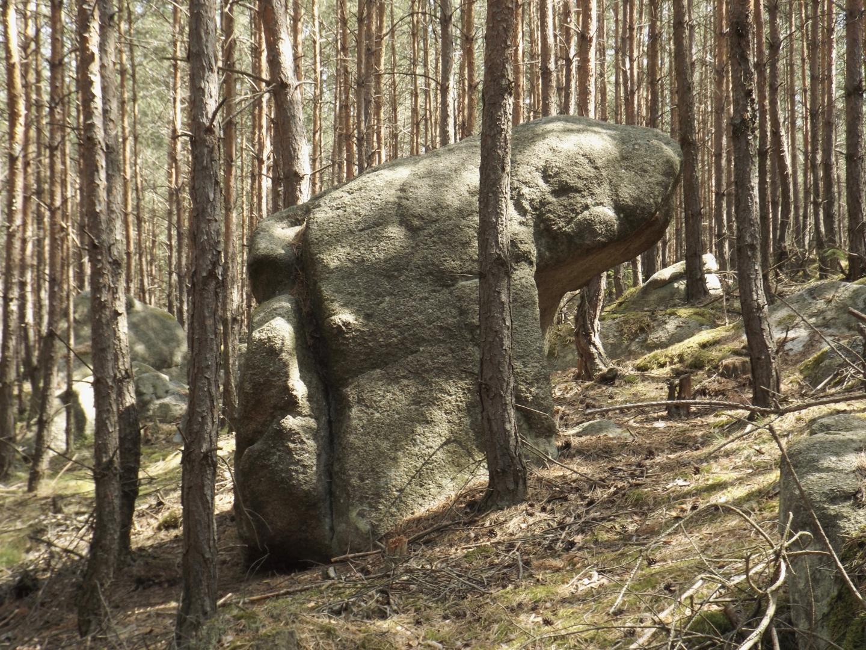 Versteinerter Bär