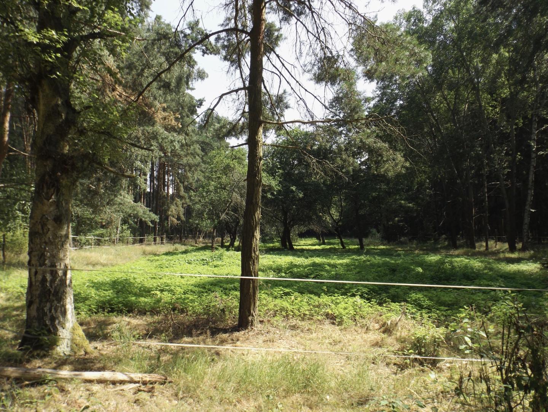 Gemüsefeld mitten im Wald, aber 200 Meter weiter ist ein größeres Anwesen