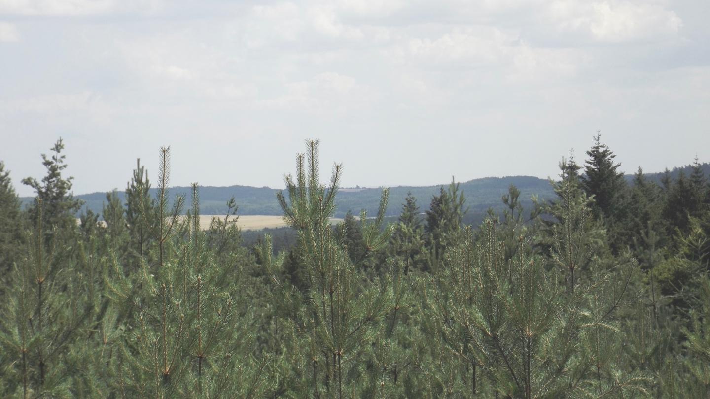 Der Südostrand hinter Baumwipfeln