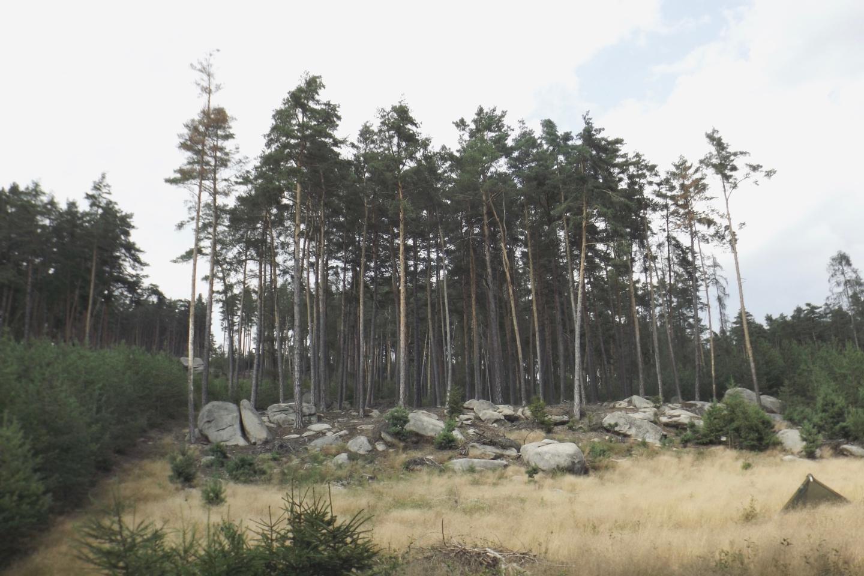 Felswand zwischen Wald und Wiese
