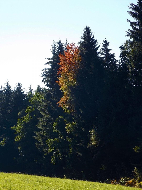 Herbstampel