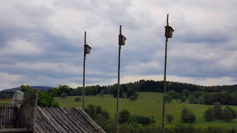 Vogelsiedlung