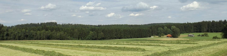Panorama Richtung Schwangbühl