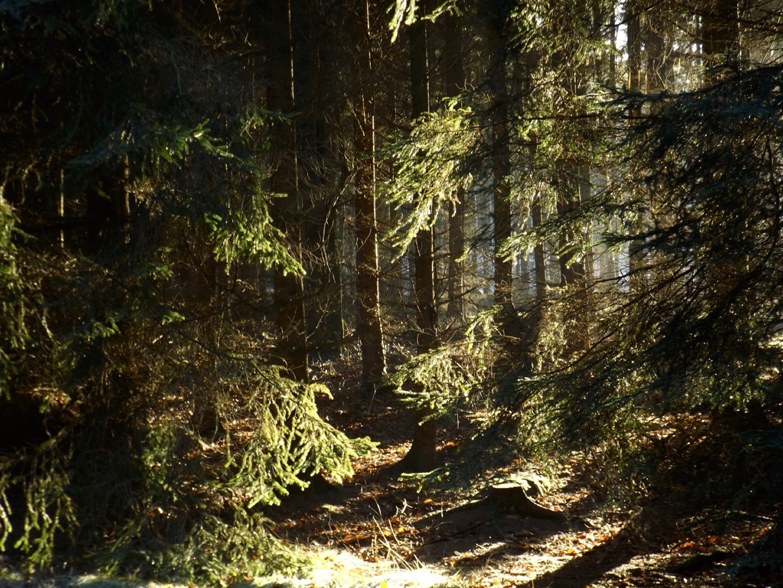 Herbstlicht im Český les