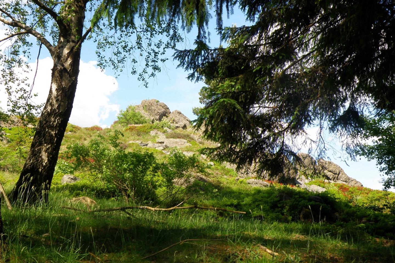 Durch die Bäume erkennt man bereits den Hochfels, eines der 100 schönsten Geotope Bayerns