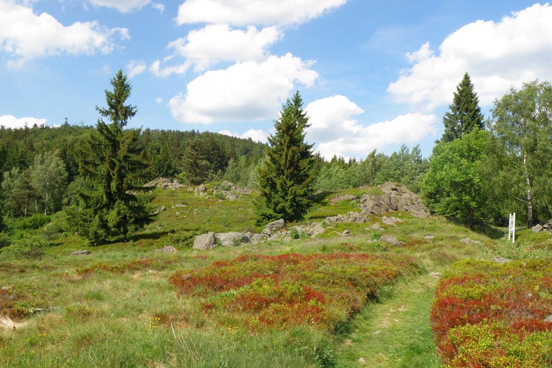 Voraus der Reichenstein. Der Bergfried ist zugewachsen und nicht erkennbar