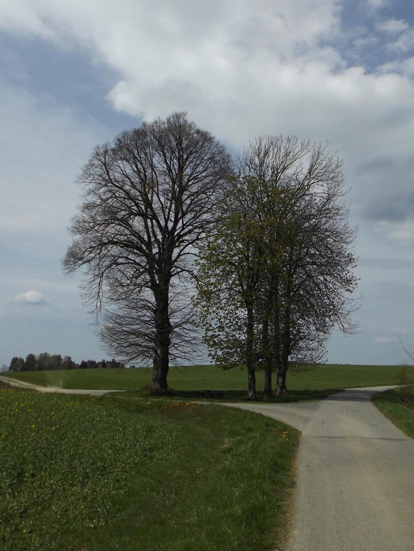 Orientierungsbäume