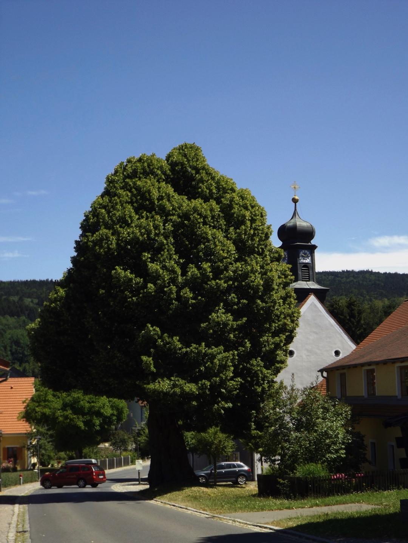 Erste Linde vor der Dorfkirche