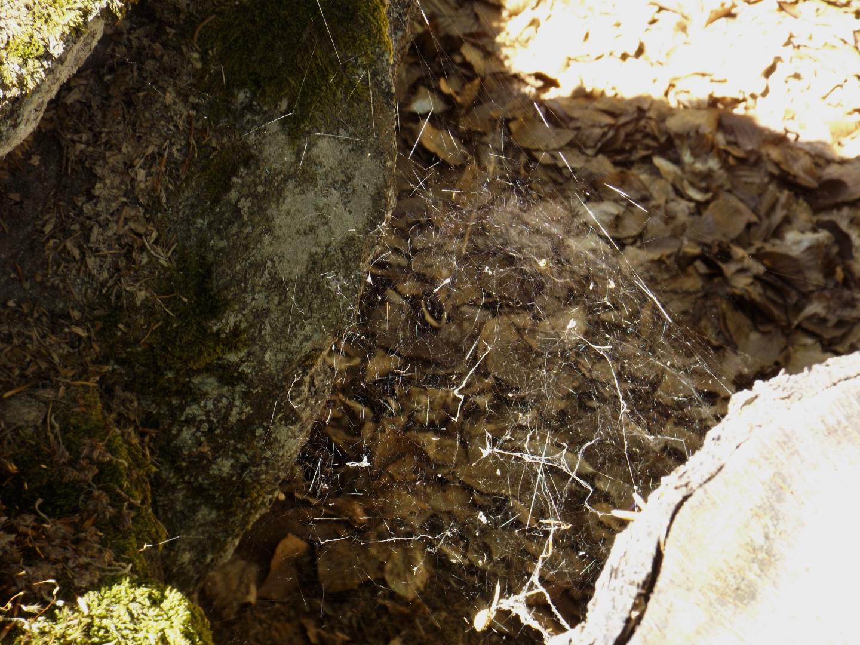 Auch hier leben Spinnen
