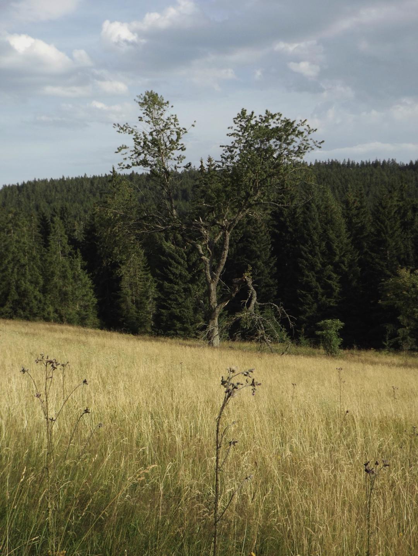 Einige Bäume durften stehenbleiben